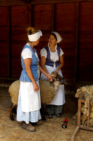 Sheep Shearers