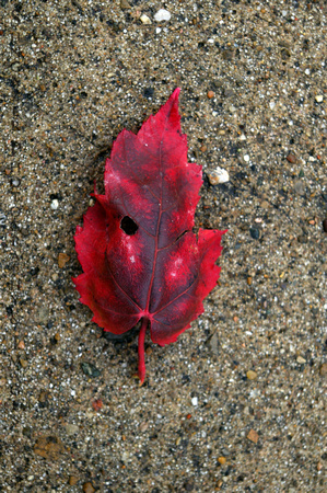 The Red Leaf