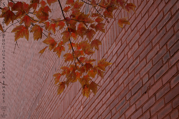 Orange Leaves against the Brick