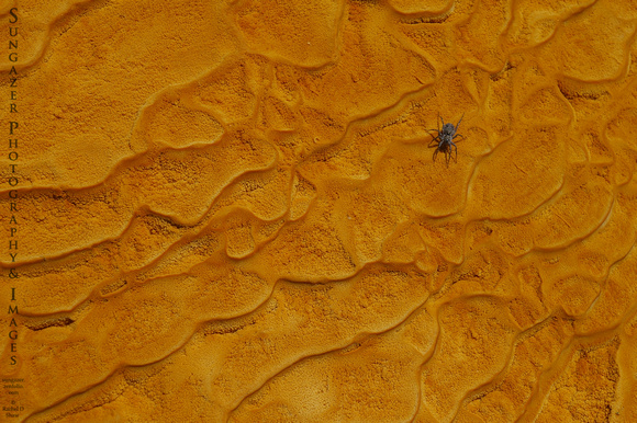 Spider on Mineral Deposits
